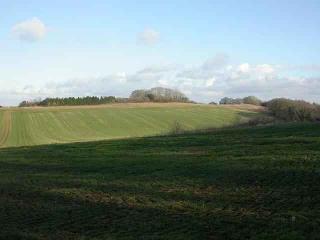 Boulsbury, grassland