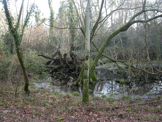Stone Hill Wood, pond