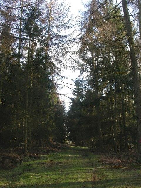 High Wood, plantation