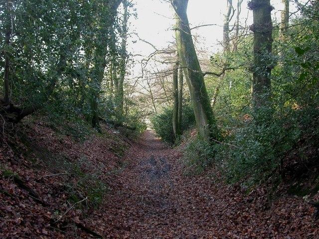 Stone Hill Wood, sunken lane