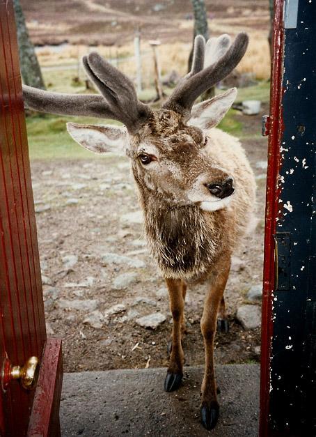 Windswept looks into Loch Ossian Youth Hostel