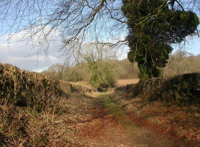 Boveridge, farm track