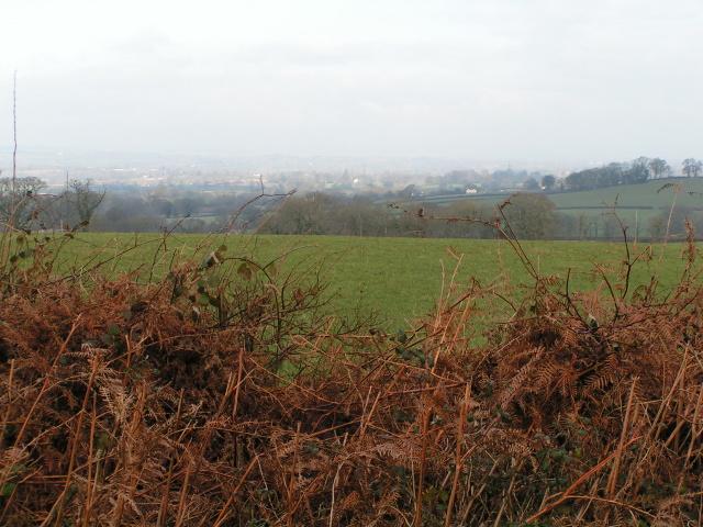 Field near Larkbeare