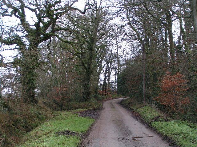 The lane heads into the woods