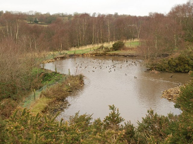 Pond, Ringdown Common