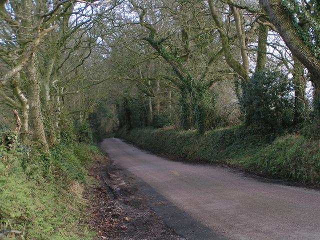 Lane through the wood