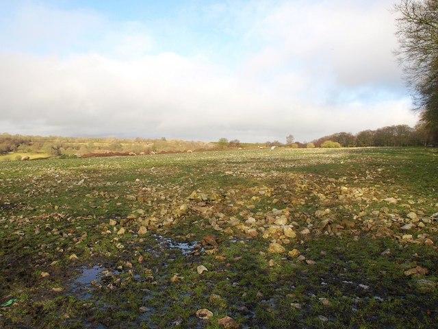 Stony field, Ringdown Common