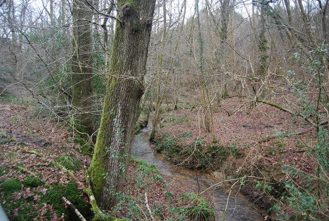 Stream, Mopesden Wood