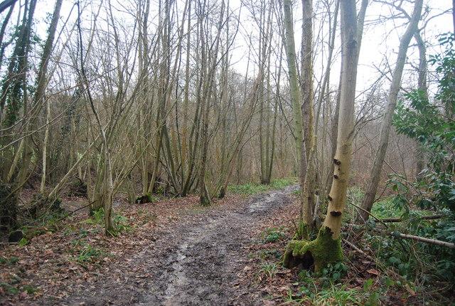 Bridleway, Mopesden Wood