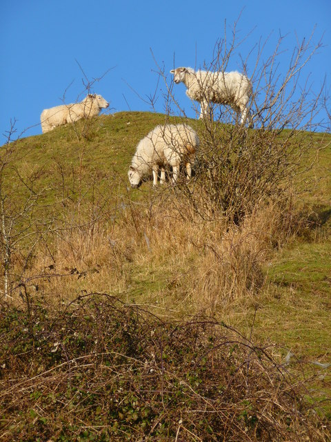 Ford - Sheep At Old Sarum