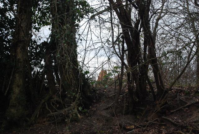 Siseley Farm Oast through a thick hedge