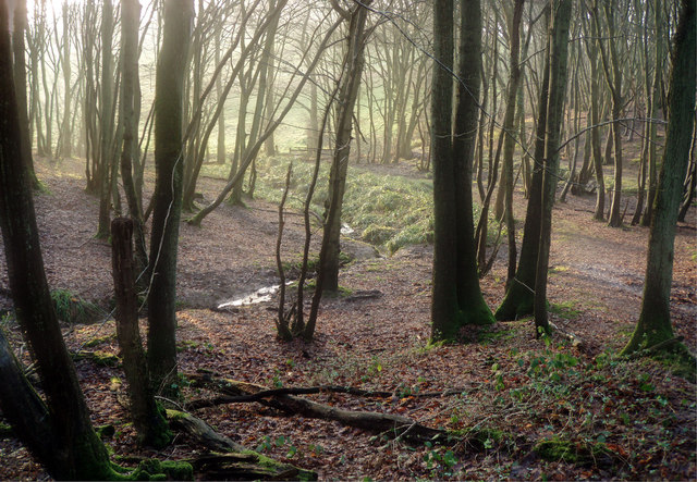 The edge of Park Wood