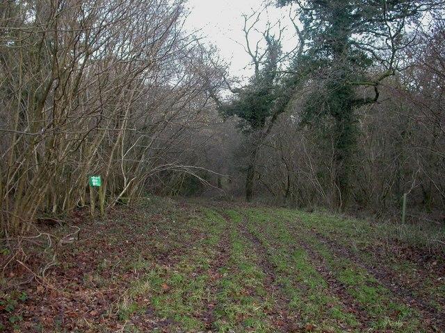 Martin Wood, woodland