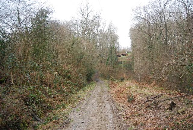 Bridleway, Tanyard Wood