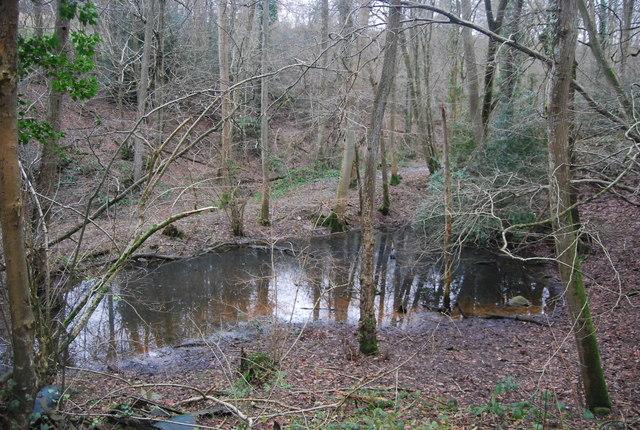 Pond, Tanyard Wood