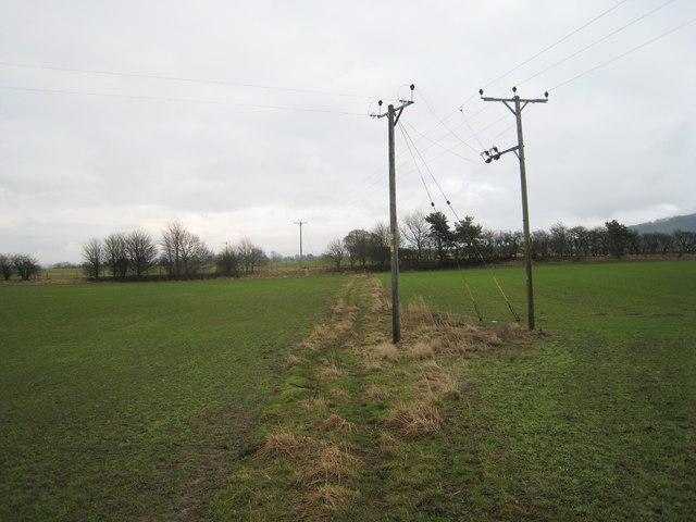 Electricity poles near Faceby Beck