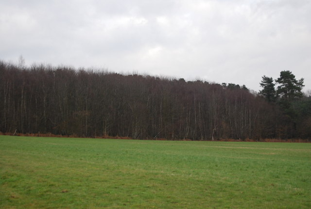 Toll Wood
