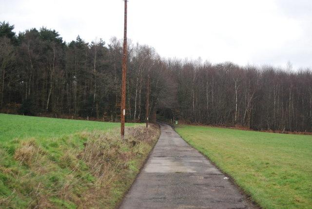 Bridleway into Little Shear Wood