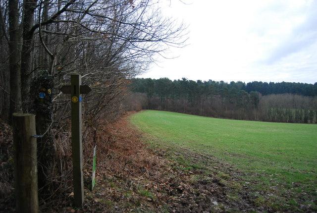 The edge of Little Shear Wood