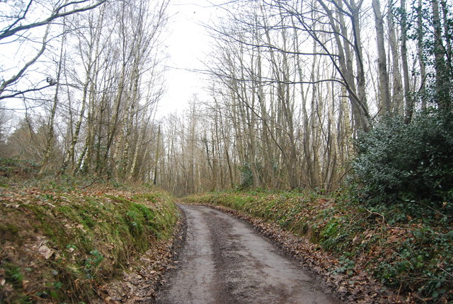 Bridleway, Little Shear Wood