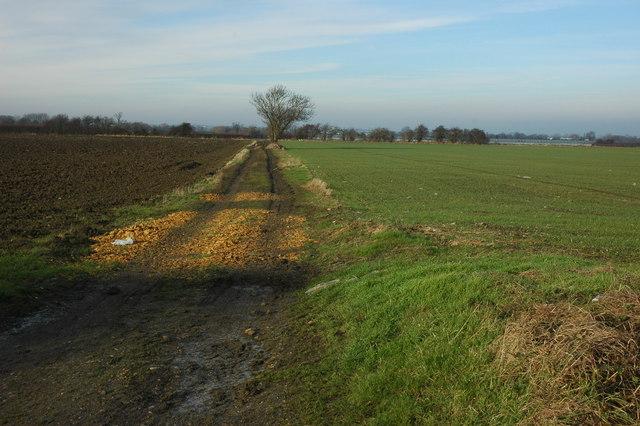 Arable land near Bretforton