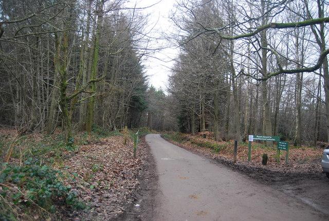 Park Lane heading into Bedgebury Forest
