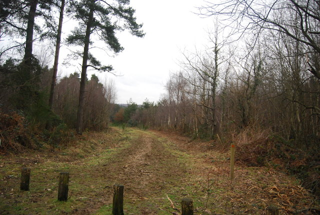 Track heading into the woods, Bedgebury Forest