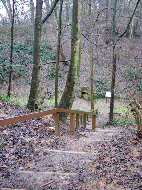 A woodland walk in Whitlingham Country Park - steep steps