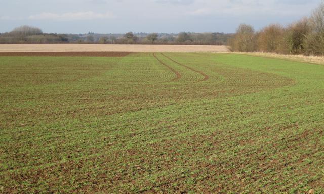 New growth near Cubbington Heath Farm