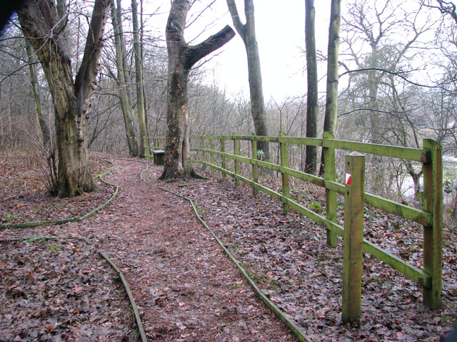 A woodland walk in Whitlingham Country Park
