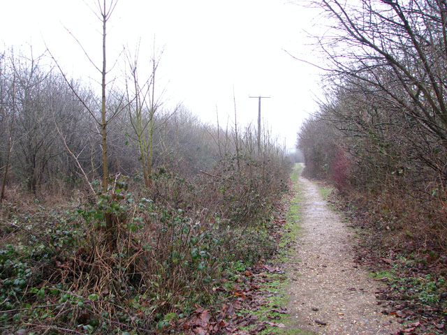 A woodland walk in Whitlingham Country Park - a gravel path