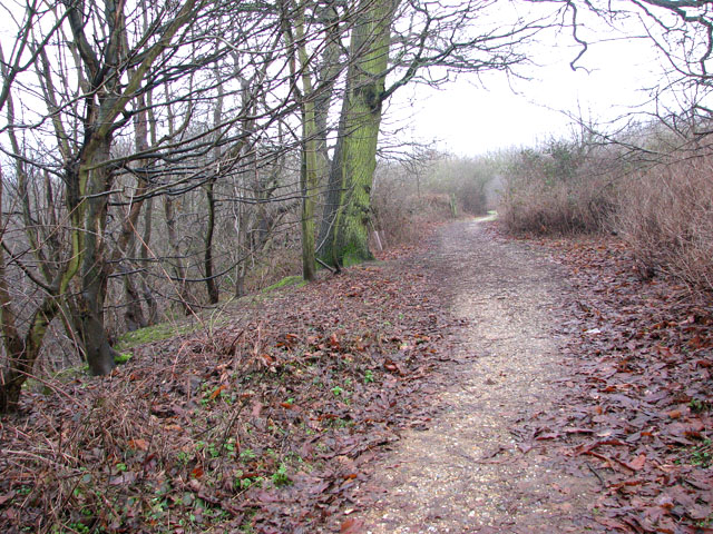 A woodland walk in Whitlingham Country Park - descent into the woods