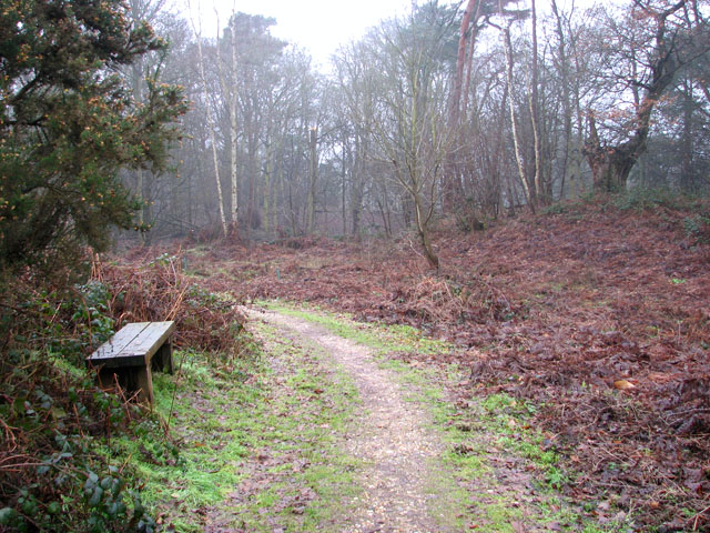 A woodland walk in Whitlingham Country Park - wooden seat