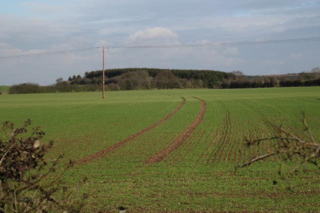 New growth near Cubbington Heath Farm 2