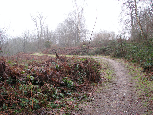 A woodland walk in Whitlingham Country Park - serpentine path