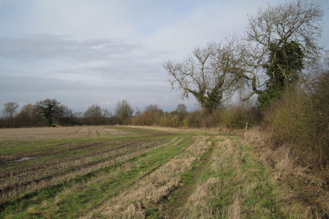 Hedgerow changes direction