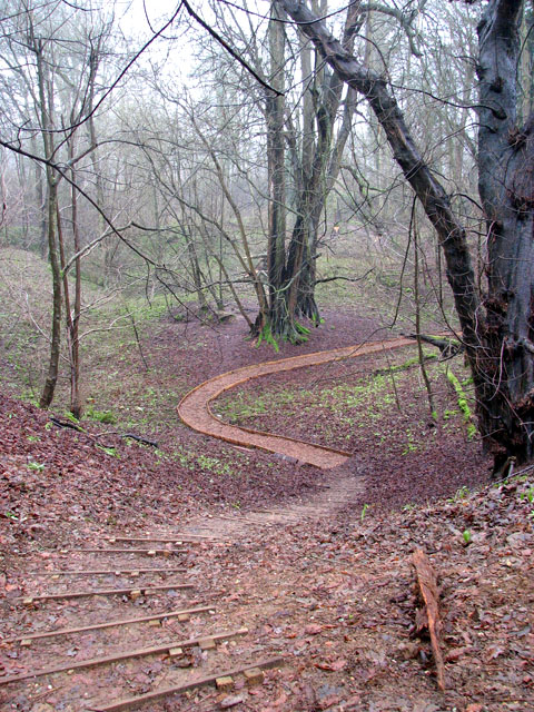 A woodland walk in Whitlingham Country Park - descent to the valley bottom