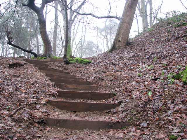 A woodland walk in Whitlingham Country Park - a steep hillside