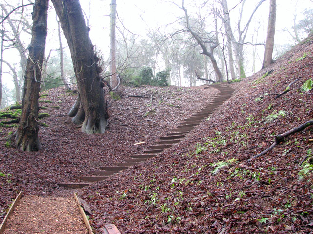 A woodland walk in Whitlingham Country Park - a steep path