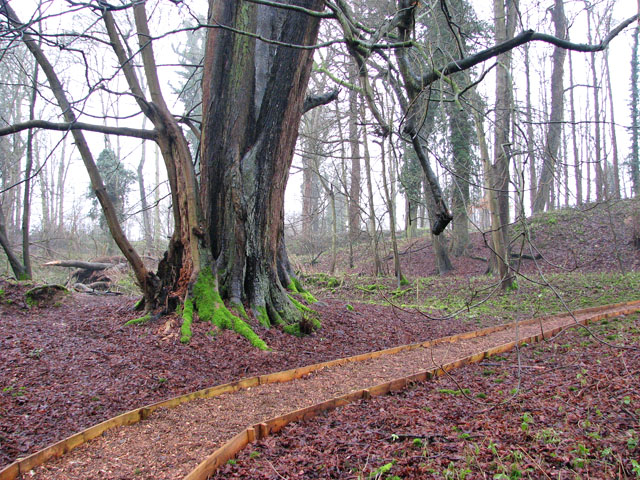 A woodland walk in Whitlingham Country Park - Old Wood