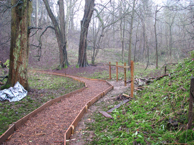 A woodland walk in Whitlingham Country Park -the Prehistoric Park
