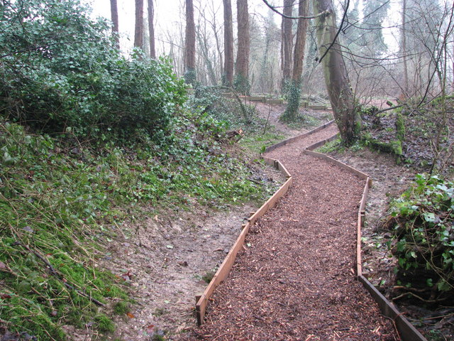A woodland walk in Whitlingham Country Park - path through Prehistoric Park