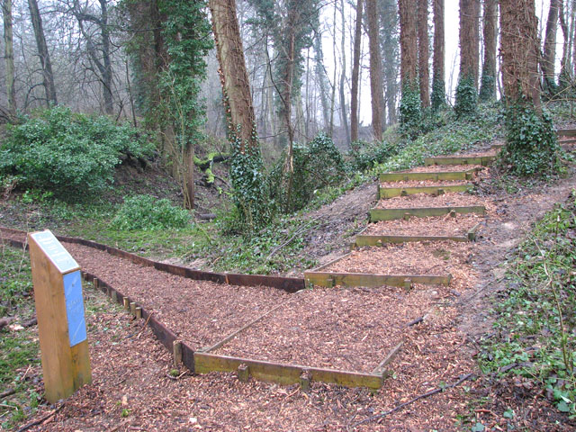 A woodland walk in Whitlingham Country Park - path junction