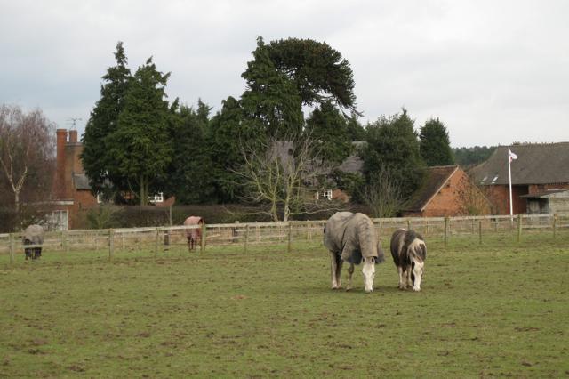 Paddocks, Furzen Hill Farm