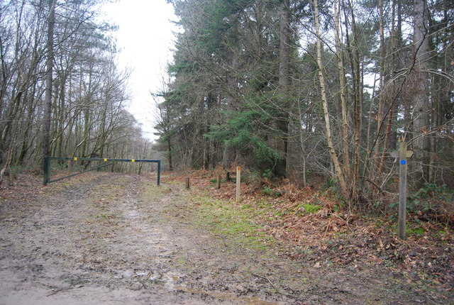 Barrier across a forest track, Bedgebury Forest