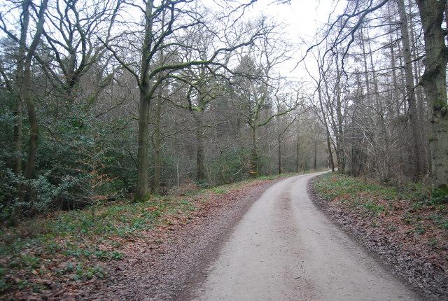 Park Lane, Bedgebury Forest