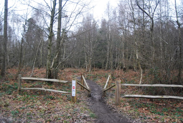 Mountain bike route, Bedgebury Forest