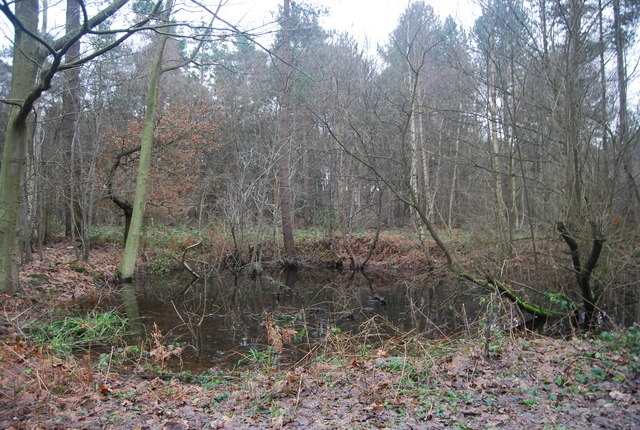 Pond, Bedgebury Forest