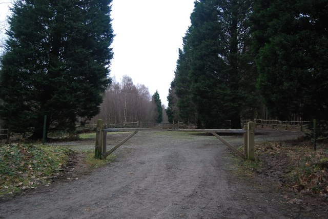 Empty parking area, Bedgebury Forest