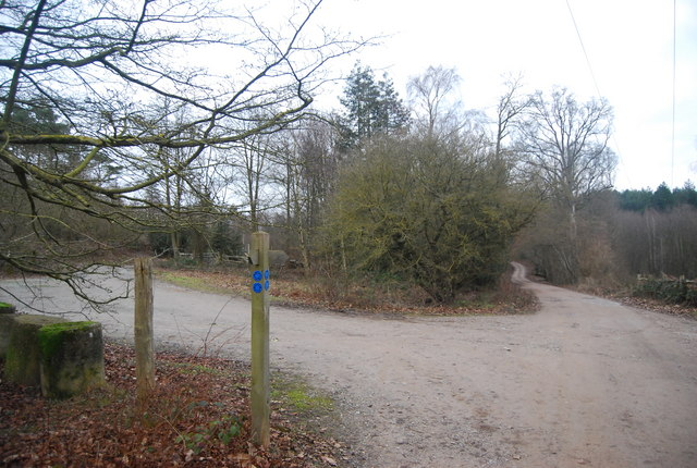 Forest track junction, Bedgebury Forest